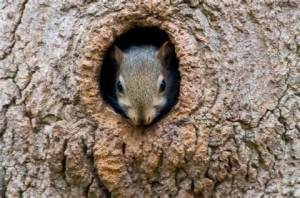 Tree squirrel planning his next attack on your garden