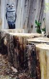 Tree Stumps 2